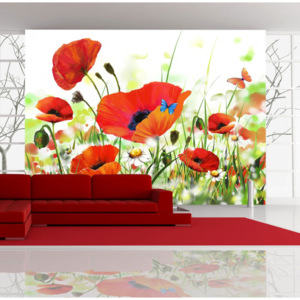 Fototapeta - Country poppies 400x270