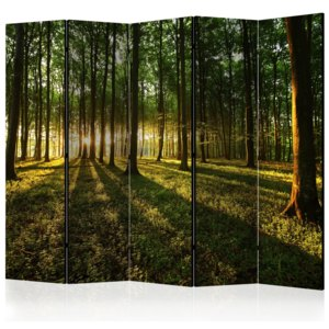 Paraván - Morning in the Forest II [Room Dividers] 225x172