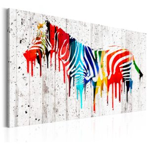 Obraz - Colourful Zebra 90x60