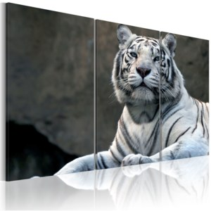 Obraz - White tiger 120x80