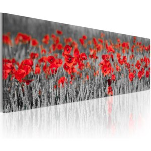 Obraz - Poppies among fields of wheat 120x40