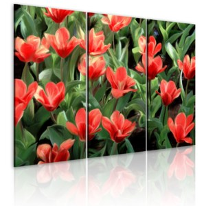 Obraz - Red tulips in bloom 60x40