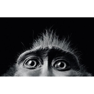 Fotoobraz - Tim Flach (Monkey Eyes)