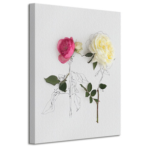 3D Obraz Pink and White Roses WDC94492