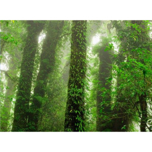MR.PERSWALL - Destinations - Rainforest - P111701-8