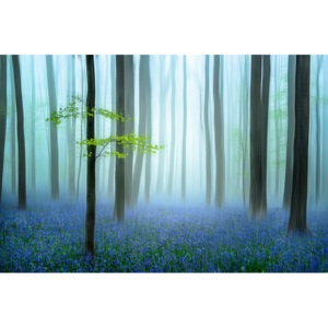 Umelecká fotografia the blue forest ........, Piet Haaksma