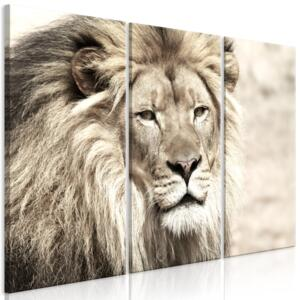 Obraz - The King of Beasts (3 Parts) Beige 90x60