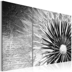 Obraz - dandelion (black and white) 60x40