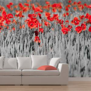 Fototapeta Bimago - Red poppies on black and white background + lepidlo zadarmo 200x154 cm