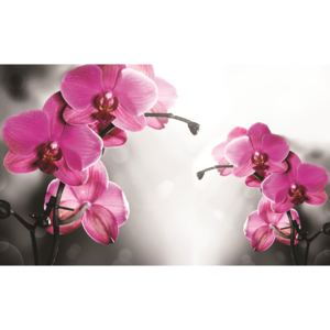 Fototapeta Orchid in grey background vlies 104 x 70,5 cm