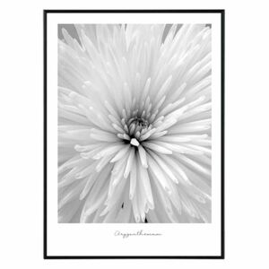 La forma Design studio Flower chrysanthemum 30x40 cm
