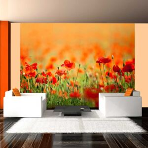 Fototapeta Bimago - Poppies in shiny summer day + lepidlo zadarmo 200x154 cm