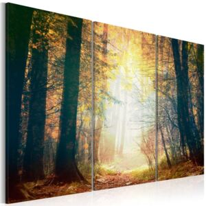 Obraz na plátne Bimago - Beauty of autumn - triptych 60x40 cm