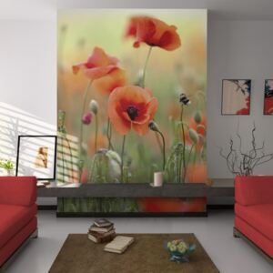 Fototapeta Bimago - The gentle charm of summer poppies + lepidlo zadarmo 200x154 cm