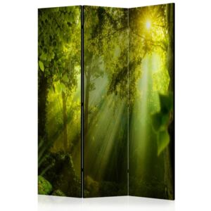 Paraván - In a Secret Forest II [Room Dividers] 135x172