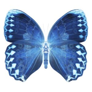 MISS BUTTERFLY FORMOSANA - X-RAY White Edition, (128 x 85 cm)