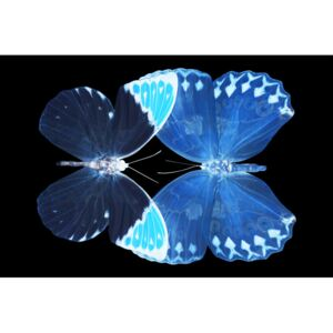 MISS BUTTERFLY DUO FORMOIA - X-RAY Black Edition, (128 x 85 cm)