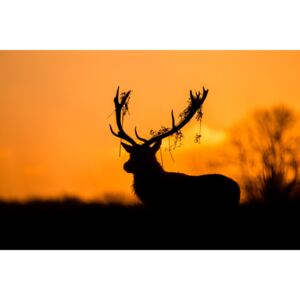 Red Deer Stag Silhouette, (128 x 85 cm)