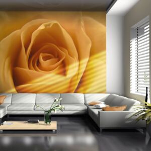 Fototapeta Bimago - Yellow rose – a symbol of friendship + lepidlo zadarmo 200x154 cm