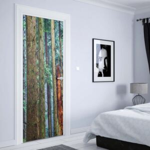 Fototapeta na dvere GLIX - Tree Textures In The Forest1 | 91x211 cm