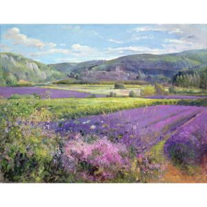 Timothy Easton - Reprodukcia, Obraz - Lavender Fields in Old Provence