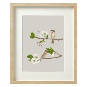 ROSE-THROATED BECARD – A2