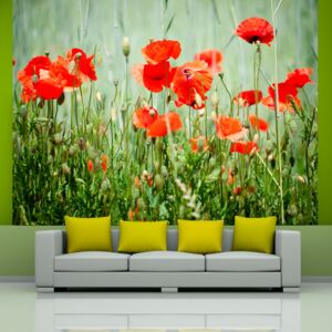 Fototapeta Bimago - Field of red poppies + lepidlo zadarmo 200x154 cm