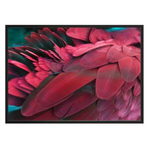Plagát DecoKing Feathers Red, 50 x 40 cm