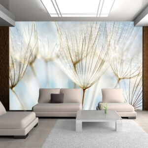 Fototapeta Bimago - Abstract dandelion flower background + lepidlo zadarmo 200x154 cm