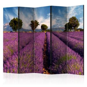 Paraván - Lavender field in Provence, France [Room Dividers] 225x172