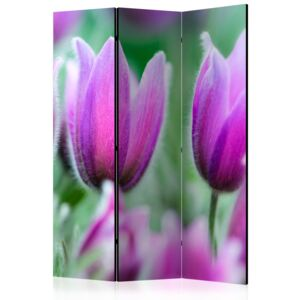 Paraván - Purple spring tulips [Room Dividers] 135x172