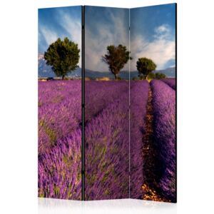 Paraván - Lavender field in Provence, France [Room Dividers] 135x172