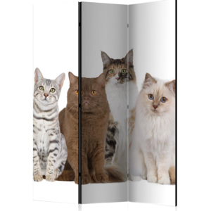 Paraván - Sweet Cats [Room Dividers] 135x172