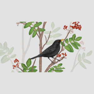BLACKBIRD ON ROWAN TWIG 2 – format A3